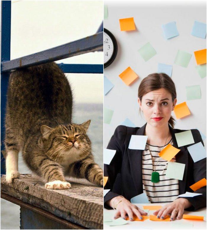 Как отдыхают коты и как работают люди
