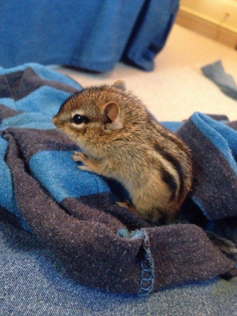 Фотографий новорожденных животных: самое милое, что видел в жизни!