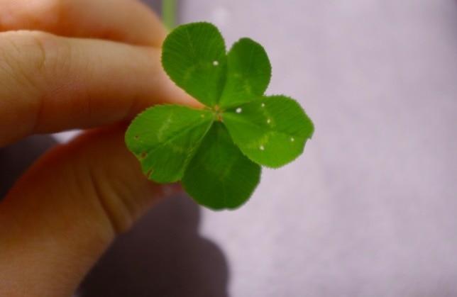 15 везунчиков, которые за один день получили больше удачи, чем все мы за всю свою жизнь