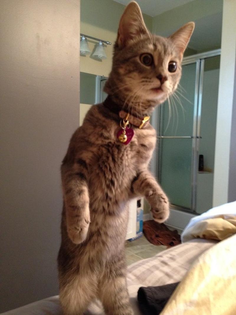 Забавные котики, в них каждый сможет увидеть себя ?