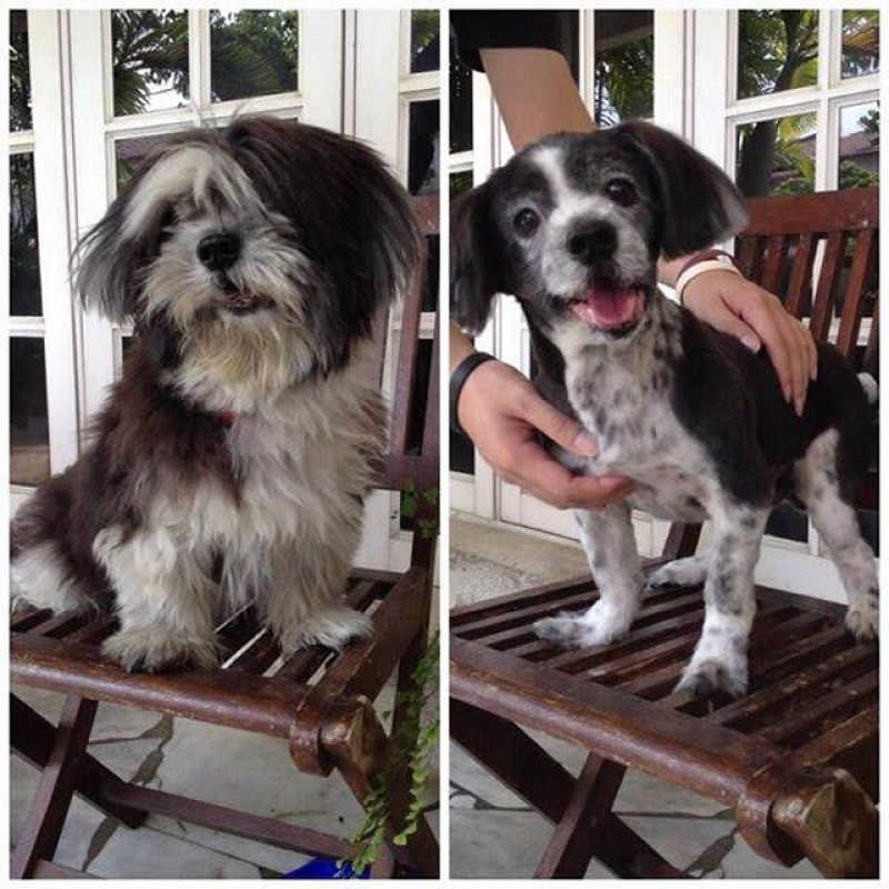Забавные собаки до и после стрижки