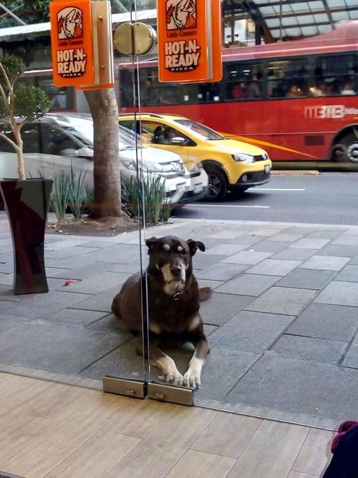 Предприимчивый пёс выпрашивал пиццу и уже почти получил, но всё испортила подвеска на ошейнике