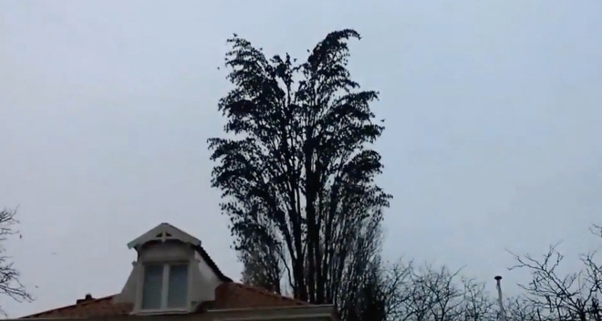 Он просто снимал дерево на видео. Теперь смотрите на 0:10