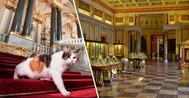 74 кота проживающих в Эрмитаже, на самом деле исполняют важную государственную работу