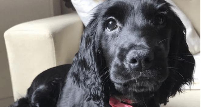 Хозяева на два часа оставили собаку одну и не узнали свою кухню