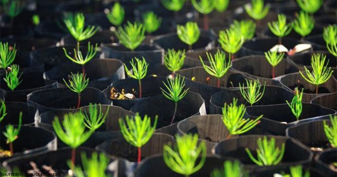 Новый закон: студенты должны посадить 10 деревьев, если хотят получить диплом