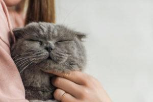 Так кошки ведут себя, когда хотят рассказать вам о плохой энергии в доме