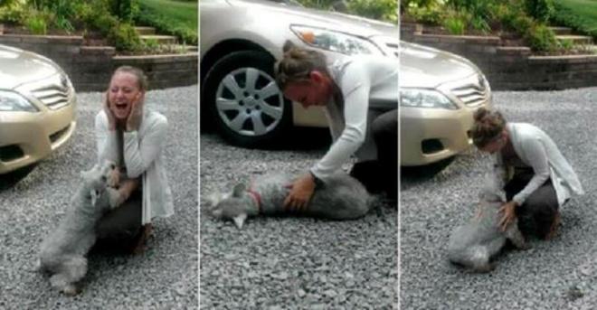 Собака падает в обморок от счастья! Кадры нечеловеческой радости после расставания!