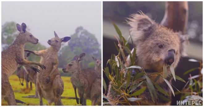 Видео, где животные из Австралии радуются дождю, покорило весь интернет. Ведь все мы хотим видеть их счастливыми