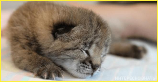 Бабушка взяла домой слепого котенка, а он вырос и оказался совсем другим животным