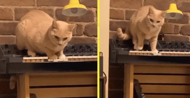 Людей испугала кошка, которая сыграла на пианино