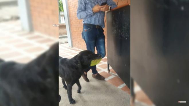 Пес приходит в магазин, чтобы купить еду за сорванные листья