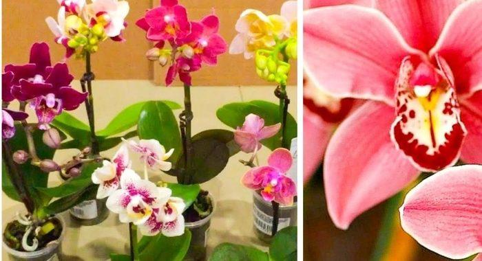 Несколько простых действий — и ваша орхидея зацветет