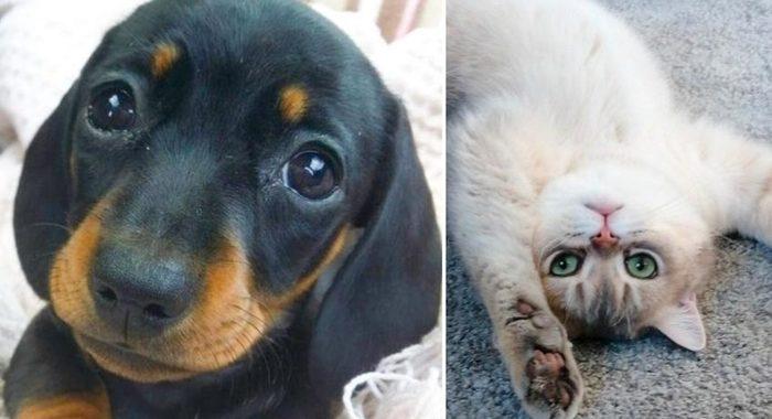 Животные-антидепрессанты которые поднимут настроение даже в самый пасмурный день